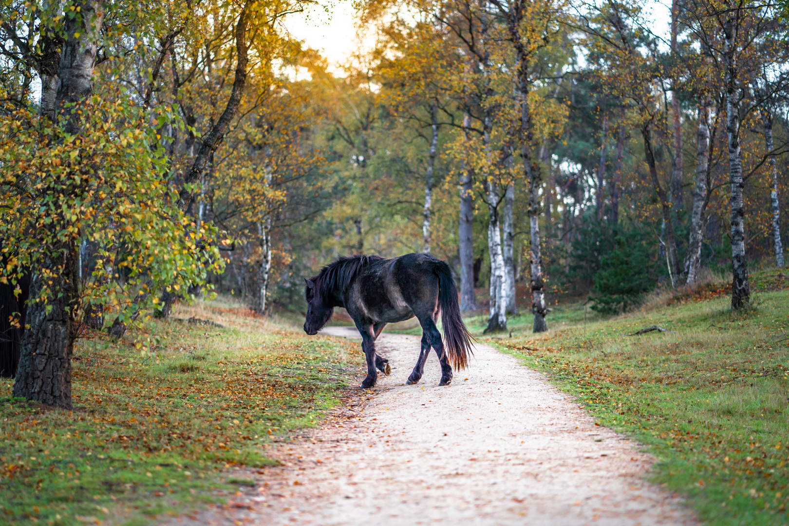 Paard op een bospad